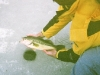 bassicefishingreleasepic